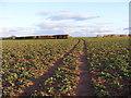 SO7798 : Crop Field Path by Gordon Griffiths