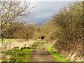 TQ5782 : Track in Belhus Woods Country Park by Roger Jones