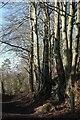 ST7361 : Footpath to Fortnight Farm by Derek Harper