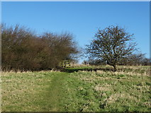 TA0114 : The path to Middlegate Lane from Worlaby by Neil Theasby
