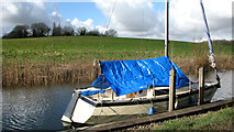 TG3204 : Meadow beside Rockland Staithe by Evelyn Simak