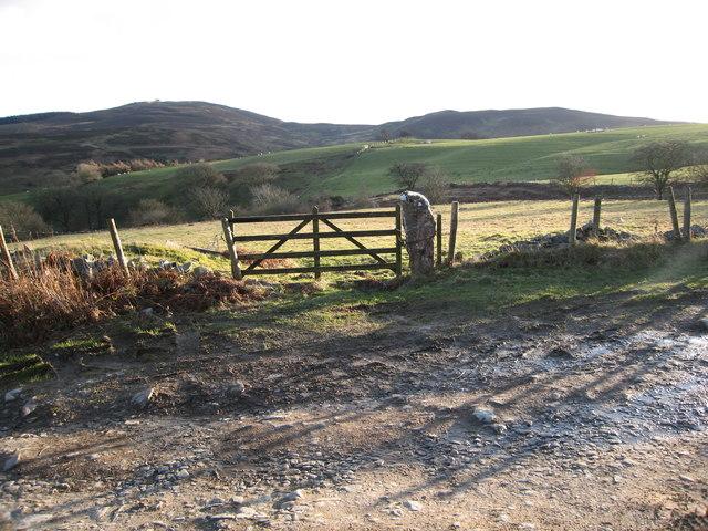 Grazing fields in The Clwydian hills