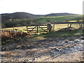 SJ1564 : Grazing fields in The Clwydian hills by Maggie Cox
