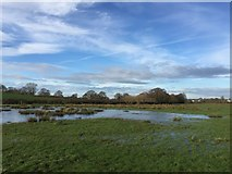 SJ7949 : Audley: flooded field at Hollins Farm by Jonathan Hutchins