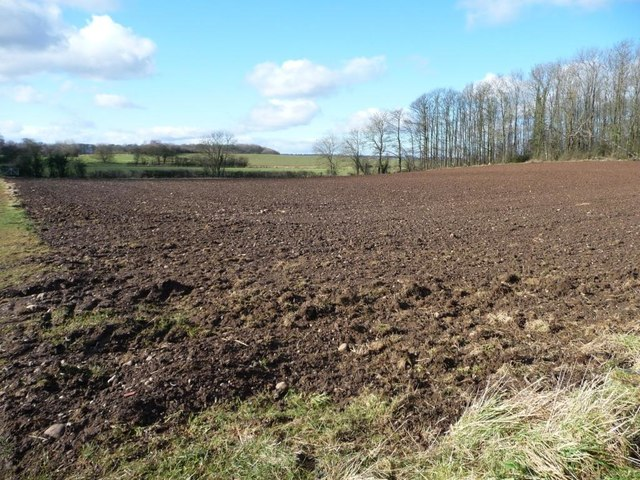 Bare field, south of Fox Covert