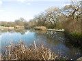 TQ2995 : Wildlife pond in Oakwood Park by Marathon