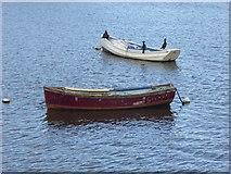 NZ4057 : Cormorants aboard! by Oliver Dixon