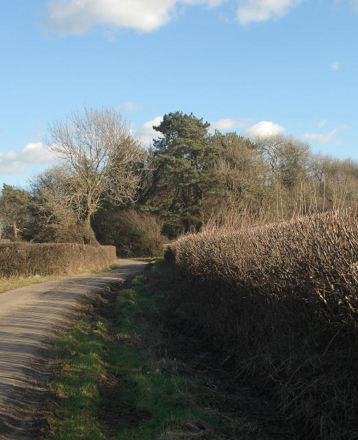 Woodland by Heol-y-Sheet, nr North Cornelly