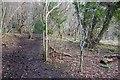 ST7561 : Path through Beech Wood by Derek Harper