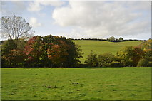 ST0104 : Autumnal colours, The Culm valley by N Chadwick