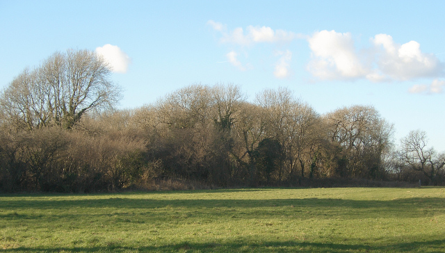 Woodland at Old Ballas, nr North Cornelly (2)