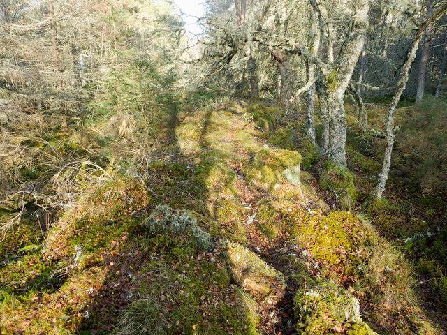 Line of bank through the Monadh Mòr bog forest