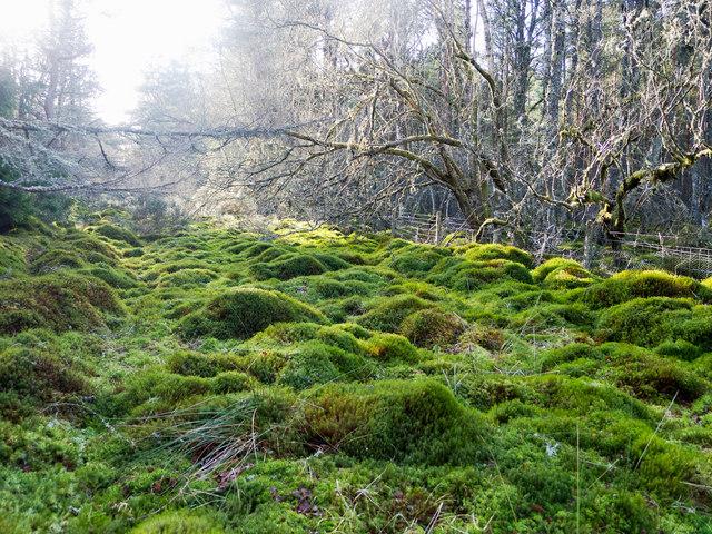 A channel of bog in Monadh Mòr bog forest