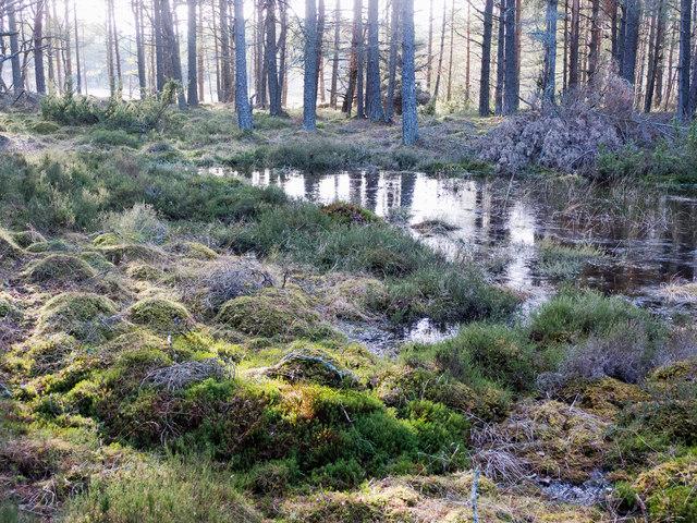 Small lochan in Monadh Mòr bog forest