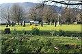 SH7961 : Daffodils beside the Eisteddfod stone circle by Richard Hoare