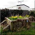 SH9478 : Daffodils, Pensarn, Abergele by Jaggery