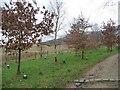 SK0698 : Memorial trees at Torside by Christine Johnstone