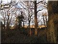 TQ0242 : Rushett Common by David Howard