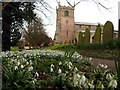SK8262 : Snowdrops at All Saints Church by Graham Hogg