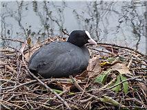 TQ3296 : Coot's Nest, New River Loop, Gentleman's Row, Enfield by Christine Matthews
