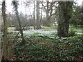 TM3160 : Snowdrops in the grounds of Parham Hall by Marathon