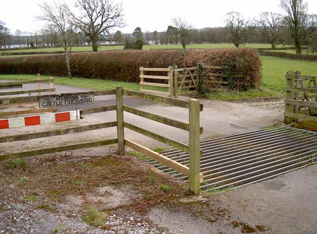 Cattle crossroads
