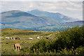 SH4164 : Grazing horses in Newborough Warren by Oliver Mills