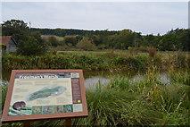 SU3268 : Kennet & Avon Canal, Freeman's Marsh by N Chadwick
