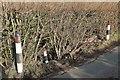 ST6761 : Oops! Near Castle Farm by Derek Harper