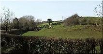 ST6660 : Pasture by the Conygre Brook by Derek Harper
