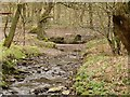 SE2132 : The Tyersal Beck in Black Carr Wood by Stephen Craven