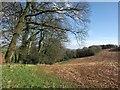 SX8257 : Towards Cottage Plantation by Derek Harper