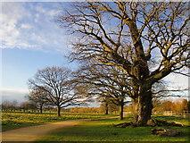 TQ2173 : Oaks by the Tamsin Trail by Stefan Czapski