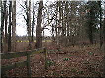 TL5960 : Woodland off the B1403 by JThomas