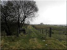 H5172 : Grassy lane, Cloghfin by Kenneth  Allen