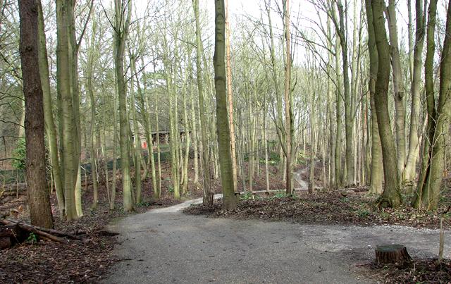 Path through GreenAcres woodland burial ground