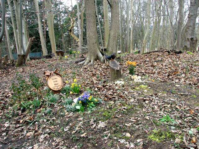 Graves at GreenAcres woodland burial ground