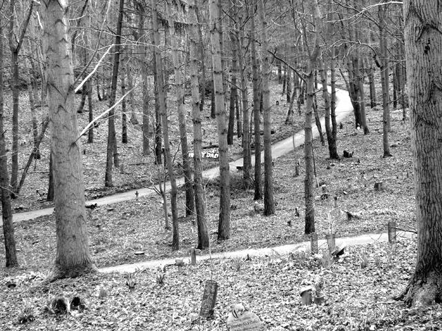 GreenAcres woodland burial ground
