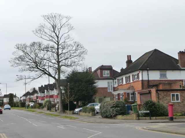 Tree on the north side of Eastcote Road