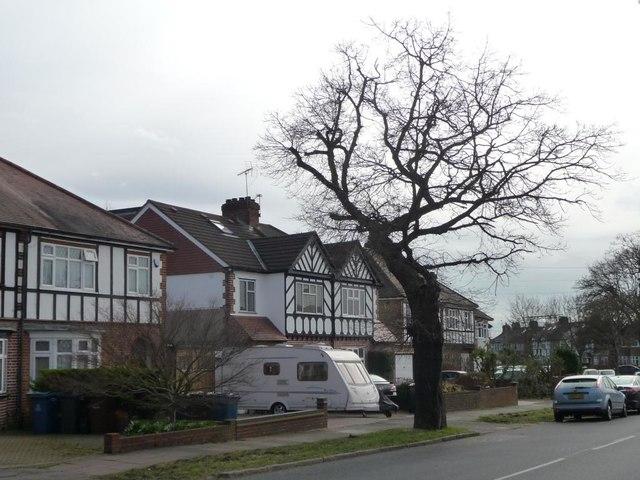 Roadside tree, Cannon Lane