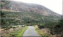 J3629 : Nursery plantation on the slopes of Slievenamaddy by Eric Jones