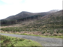 J3629 : The upper forest road in Donard Wood by Eric Jones