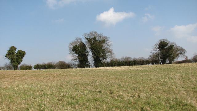 Meadow near Bawburgh