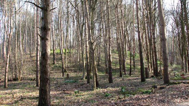 Conifers at GreenAcres