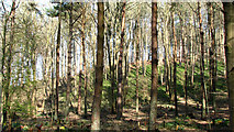 TG1608 : GreenAcres woodland burial ground by Evelyn Simak
