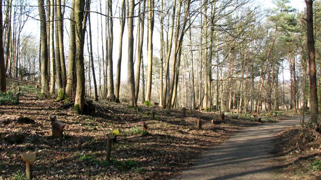Path past woodland graves at GreenAcres