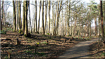 TG1608 : Path past woodland graves at GreenAcres by Evelyn Simak