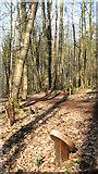 TG1607 : A path at GreenAcres by Evelyn Simak