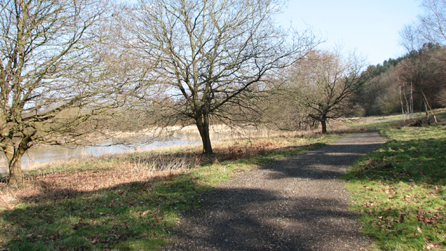Path along the edge of Colney Wood