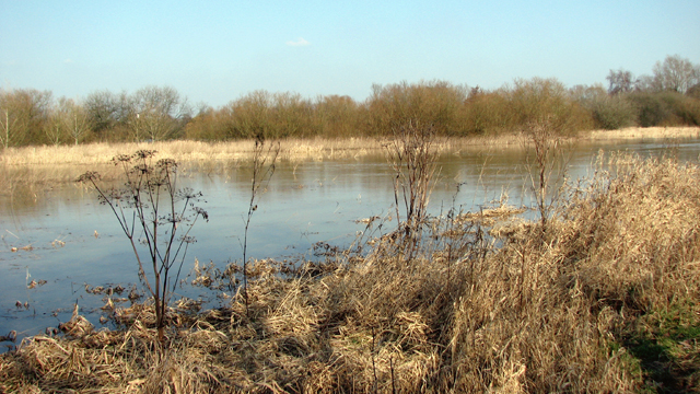 A flooded River Yare
